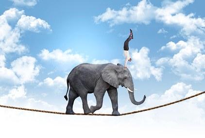 elephant on tightrope