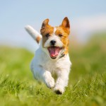 Thrifty living with your dog
